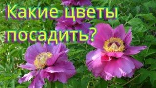 Цветы для сада!  Неприхотливы, но весьма красивы!(Цветов, которые украсят сад много Но есть цветы требующие особого ухода. В фильме представлены цветы не..., 2016-09-19T17:43:34.000Z)