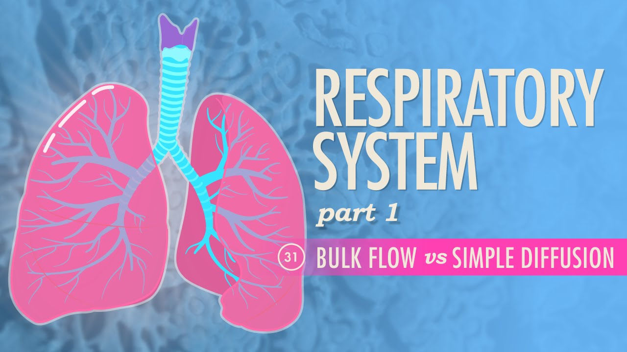 Respiratory System, part 1: Crash Course A&P #31 - YouTube