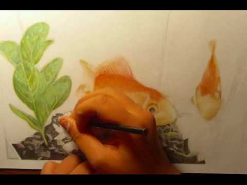 Goldfish drawing in colored pencils fish in water for Fish out of water watercolor