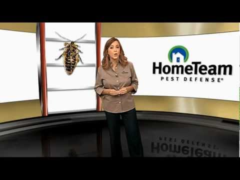 Quality Pest Control with The HomeTeam 6-Point Advantage Service
