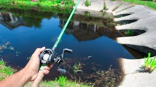 Searching for GIANT BASS in BLAZING Heat (Bed Fishing)