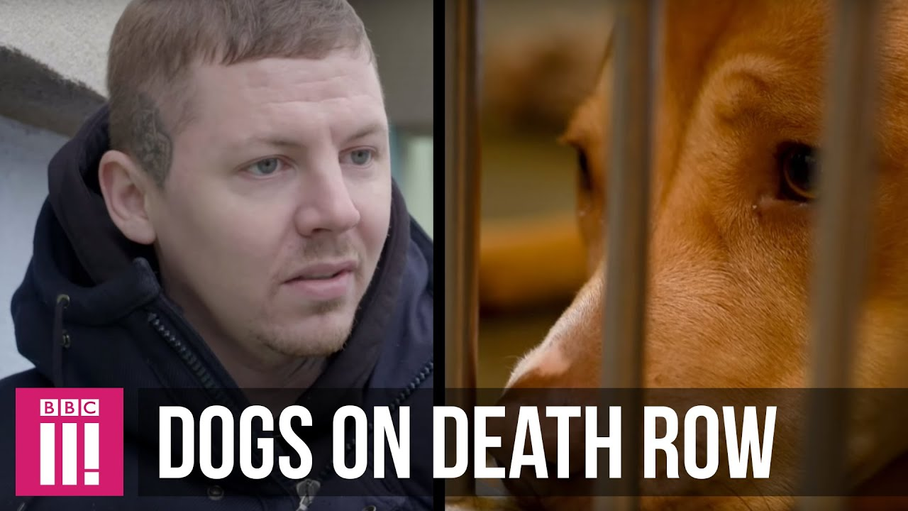 Professor Green | The Dogs On Death Row