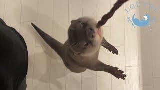 カワウソの子どもと遊んでいたら、ママが嫉妬した! Otter Gets Jealous When I Play With Her Children