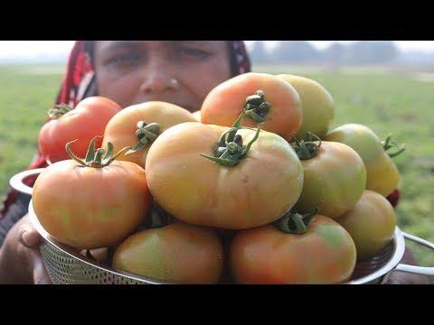 FARM FRESH Tomato Paste Cooking Village Style Delicious Fresh Tomato Pure Vorta Recipe Village Food
