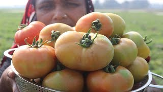 FARM FRESH Tomato Paste Cooking Village Style Delicious Fresh Tomato Pure Vorta Recipe Village Food