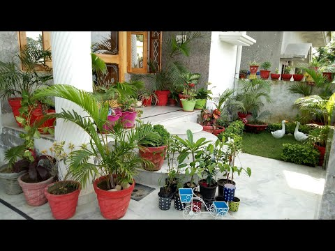 little garden overview with update //My new plant shopping//Garden decoration