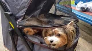 коляска для животных