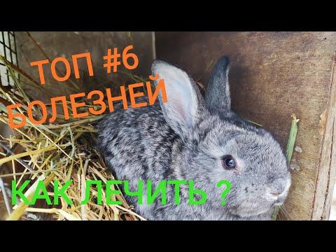 Самые распространенные болезни кроликов //Лечение//Жизнь в деревне!!!