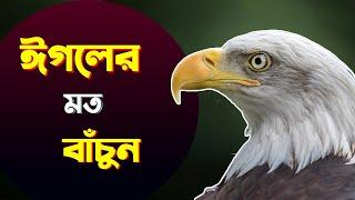 যে ৭টি কারনে পাখির রাজা 'ঈগল' | Eagle Mentality | Bangla Motivational Video