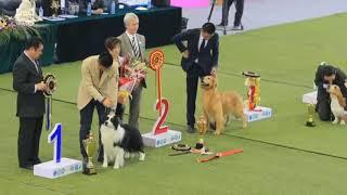 best in show dog | Dog show winner | Border collie dog show 2021