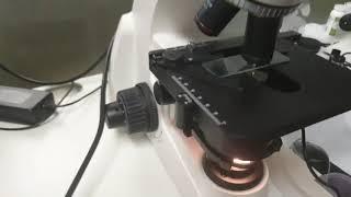 고급형 모낭충 현미경 관찰