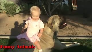 𝗚𝗮𝗺𝗲𝘀 赤ちゃんの遊びと保護のマスティフ犬のビデオ編集𝟮𝟬𝟭𝟴 - 面白い犬...