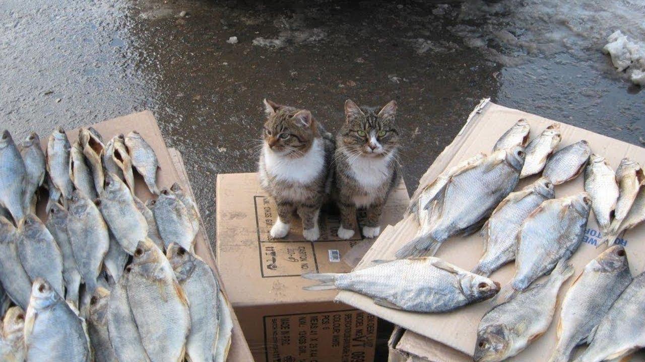 Я РЖАЛ ПОЛЧАСА. Смешные Коты и Собаки. ПРИКОЛЫ С ЖИВОТНЫМИ. 21 | автоматический сайт для заработка
