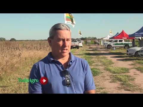Cultivo por cultivo ¿Cómo fueron las estrategias agrícola en Córdoba?