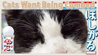 欲しがるー猫