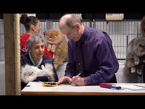 CFA International Cat Show 2017 - Brian Moser Longhair Kitten Final