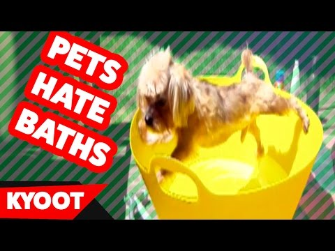 Cats & Dogs Hate Taking Baths Home Videos of 2016 Weekly Compilation | Kyoot Animals