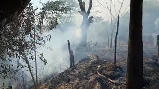 Breaking News: Rakhine set fire to Rohingyas' cattle sheds and hay pile in Buthidaung