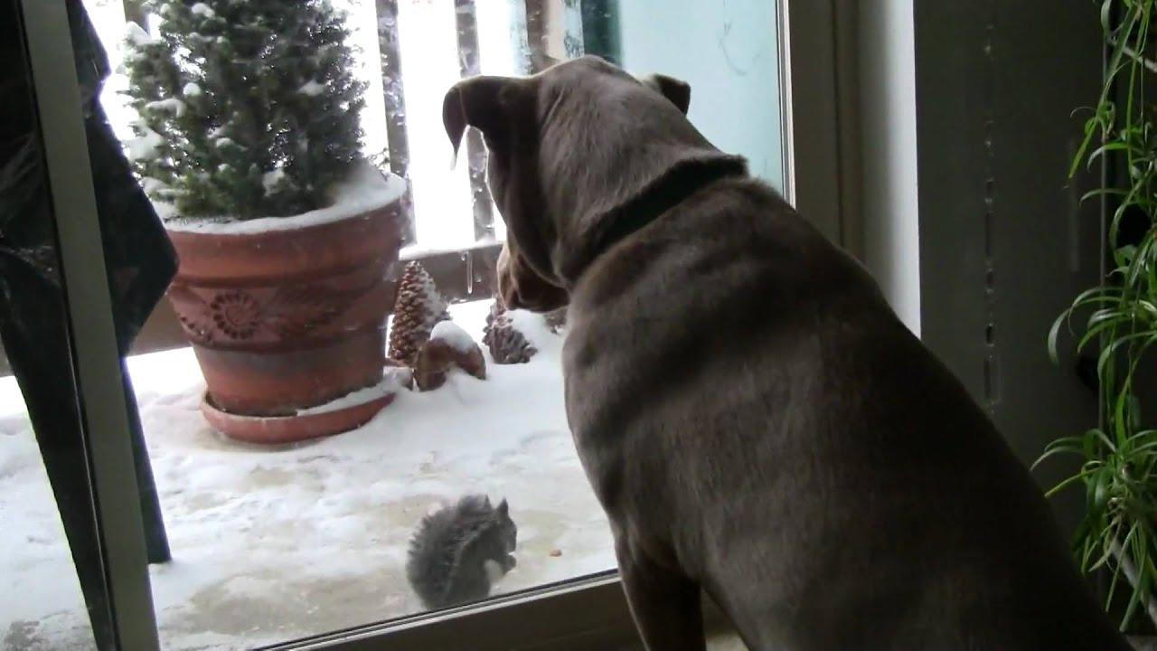 Dog Watching Squirrel Youtube