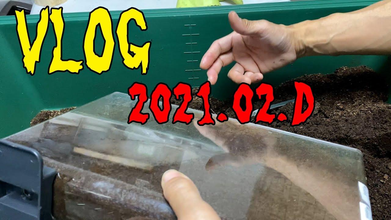 VLOG 2021 02 D