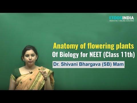 NEET I Biology I Anatomy of flowering plants : Vol-1 I Shivani Bhargava (SB) Mam from ETOOSINDIA.COM