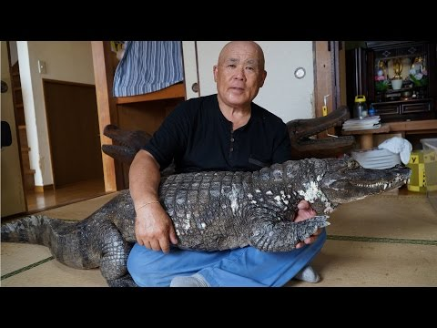 The Love Doctors - Japanese Guy Has Pet Caiman,Walks It With No Mouth Restraint!