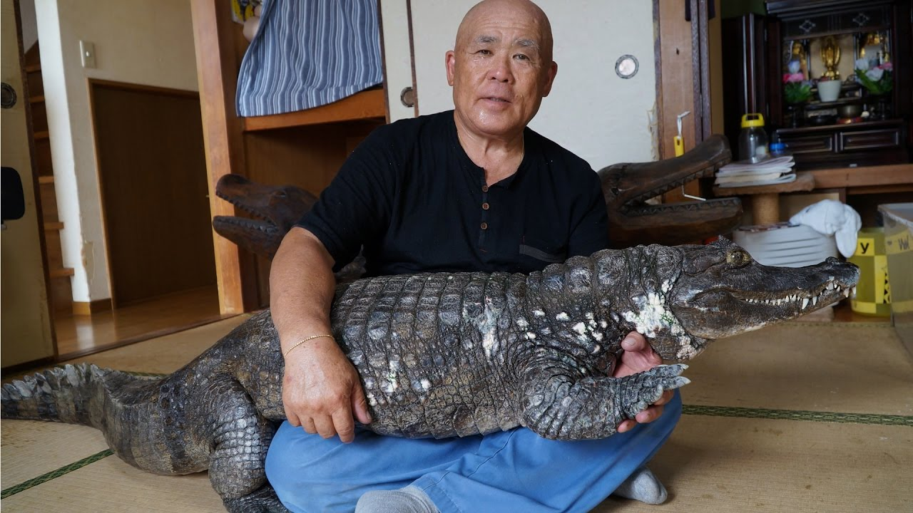 Japanese Man Lives With Giant Pet Caiman