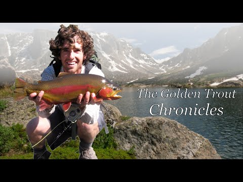 The Golden Trout Chronicles- Fly Fishing For Trophy Golden Trout