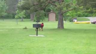 Doberman Pinscher And Dachshunds Running Around The Park