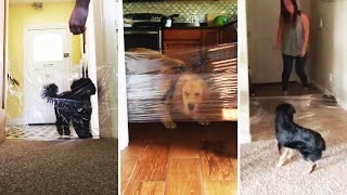 Is the #InvisibleChallenge Safe for Your Pets?