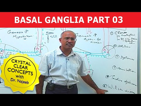 Basal Ganglia - Neuroanatomy - Part 3/3