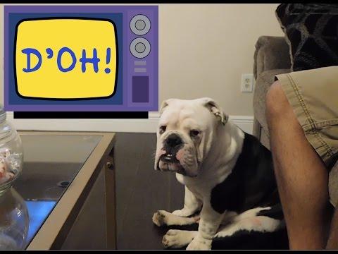 Beefcake English Bulldog Puppy Broken Elbow | FunnyDog TV