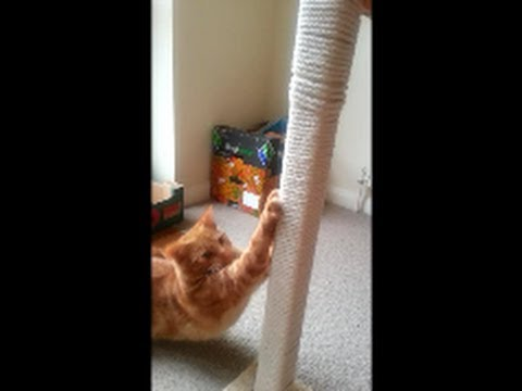HOW TO MAKE YOUR OWN CAT SCRATCHING POST