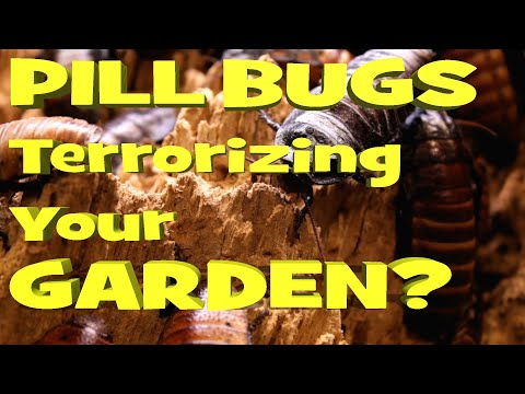 How to Get Rid of Pill Bugs