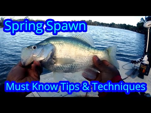 Crappie Fishing Spring Spawn Tips And Tricks