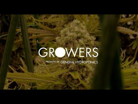 Leafly TV | Growers | Ep. 104 - The Giving Tree Wellness Center