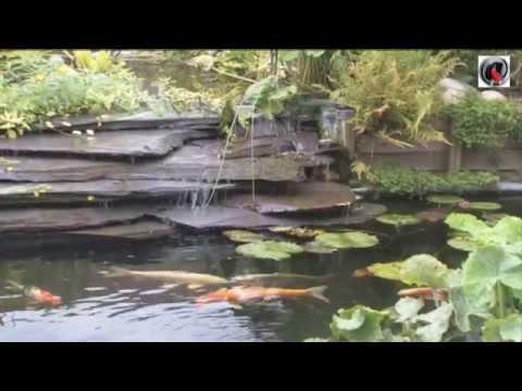 Bassin de jardin a Lagunage
