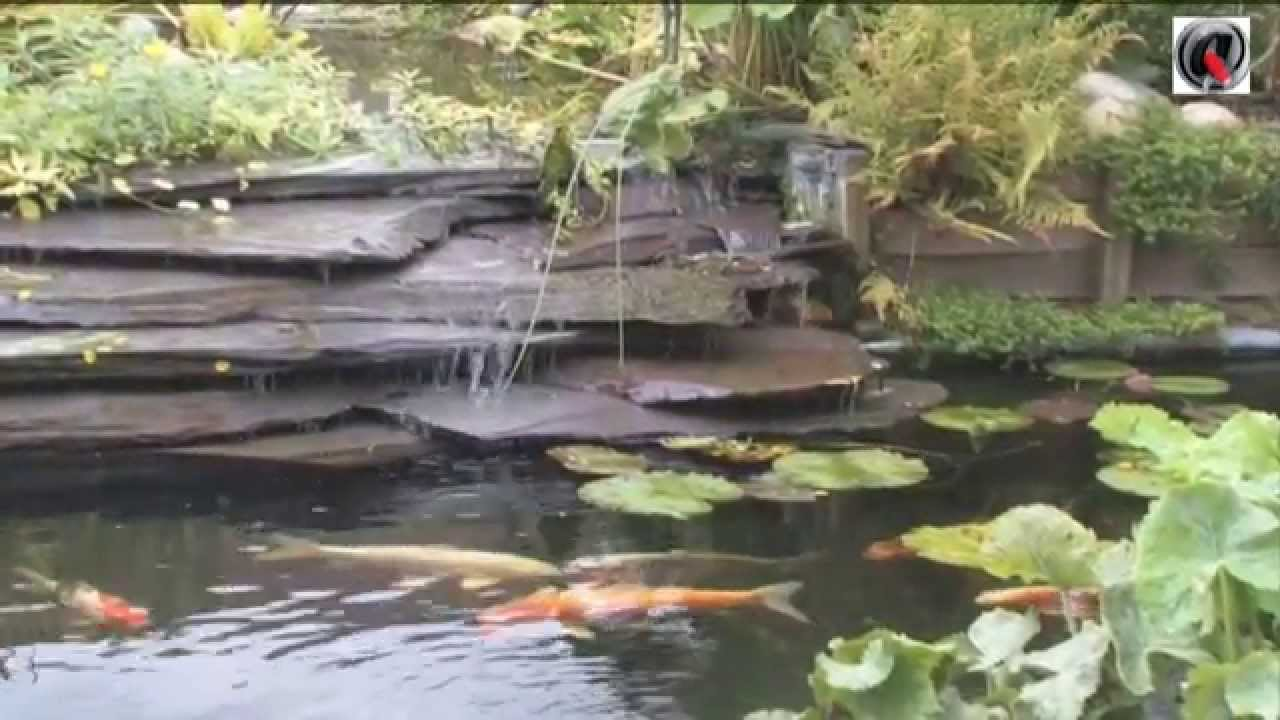 Bassin de jardin a lagunage youtube - Photo de bassin de jardin ...
