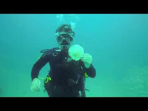 Gulf Dive Airplane Barge 2019