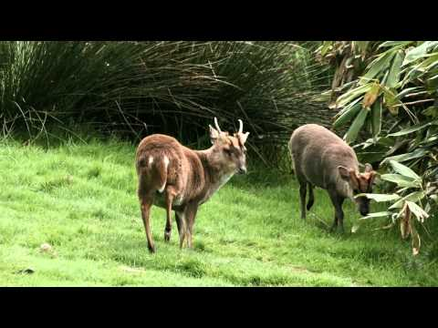 Web video of Dartmoor Zoo - A Student training film made by Plymouth based FLM