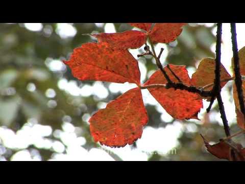 Autumn colours around Mussoorie