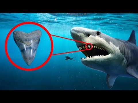 Did They Find a Living Megalodon in the Mariana Trench?