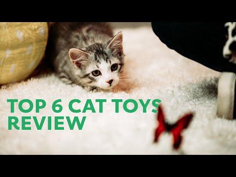 top-6-cat-toys-of-2020-review-|-rover.com