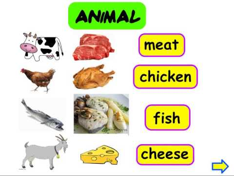 animal and plant origin food