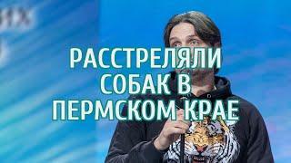 Дрессировщик Запашный высказался о расстреле собак экс-чиновником в Прикамье