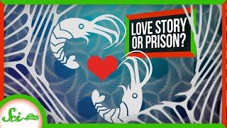 The Shrimp and the Sponge: A Deep Sea Love Story