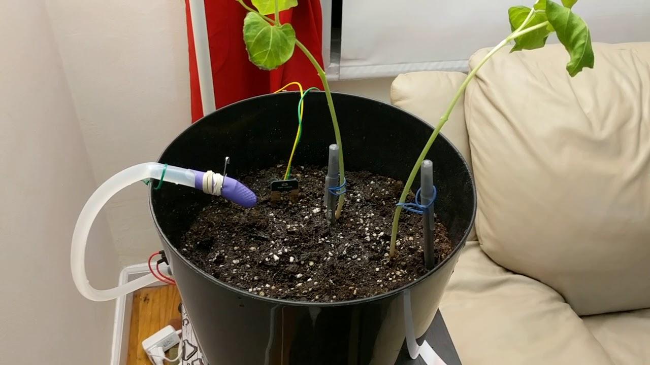 GreenPiThumb: A Raspberry Pi Gardening Bot - mtlynch io