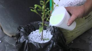 How to Make Pomegranate Plant Cuttings : Solving Plant Needs