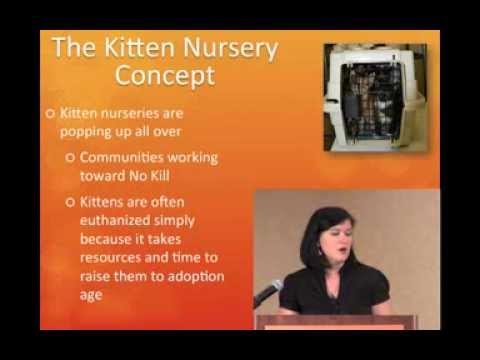 Saving More Kittens with Kitten University