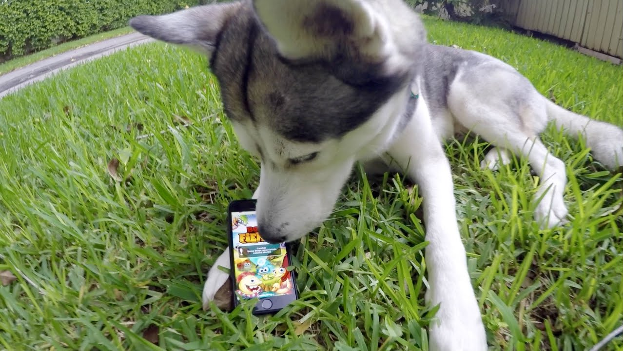 Best Fiends with Gohan The Husky!